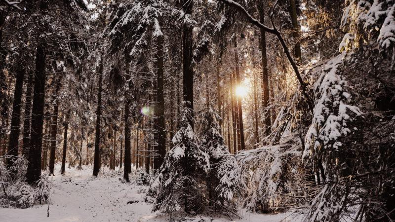 Snowy Forest 2, Belgium - Virginie Suys Photo Canvas HD