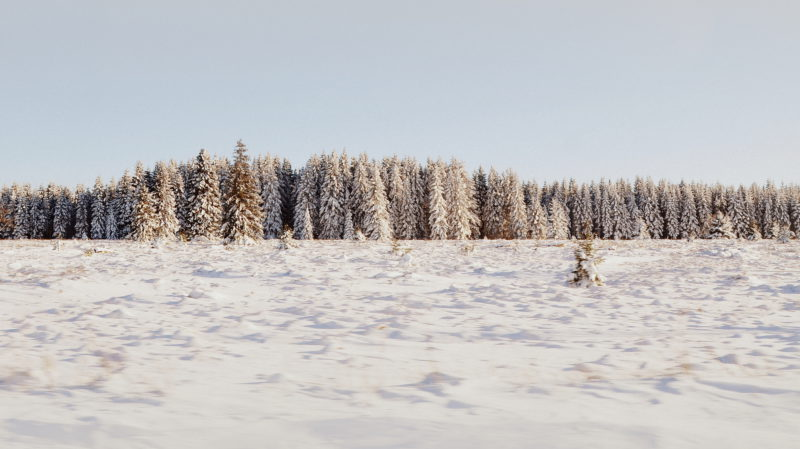 Snowy pine Forest, Belgium - Virginie Suys Photo Canvas HD