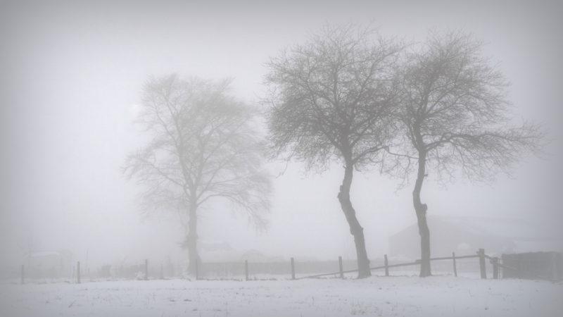 Misty winter, Ardennes, Belgium - Virginie Suys Photo Canvas HD