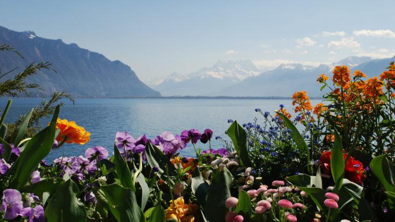 Flowers in Montreux, Switzerland -Virginie Suys Photo Canvas HD