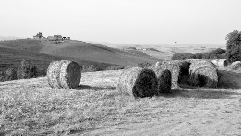 Harvested corn field with hay bales black & white, Tuscany, Italy - Virginie Suys Photo Canvas HD