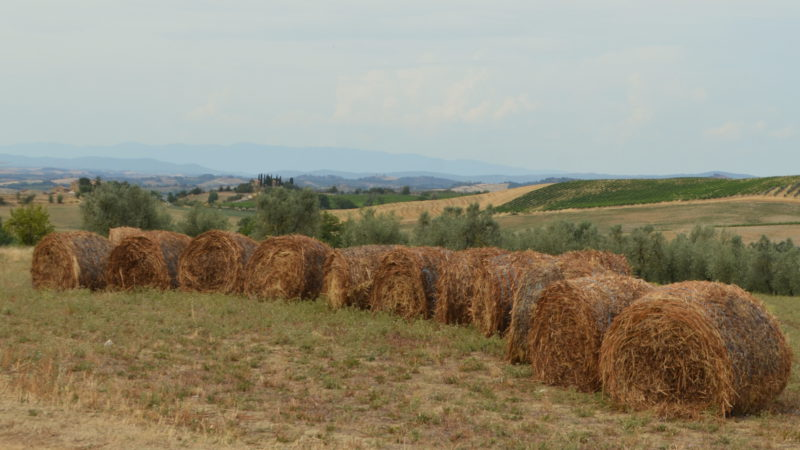 Harvested brown corn field with hay bales, Tuscany, Italy - Virginie Suys Photo Canvas HD