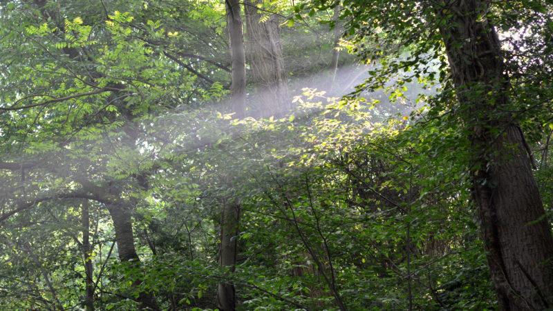 Sunbeam in green forest, Limburg, Belgium -Virginie Suys Photo Canvas HD