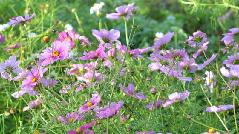 Purple flowers field, Bordeaux, France -Virginie Suys Photo Canvas HD