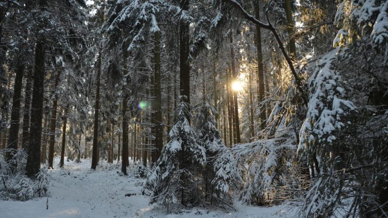 Snowy Forrest 1, Ardennes, Belgium - Virginie Suys Photo Canvas HD