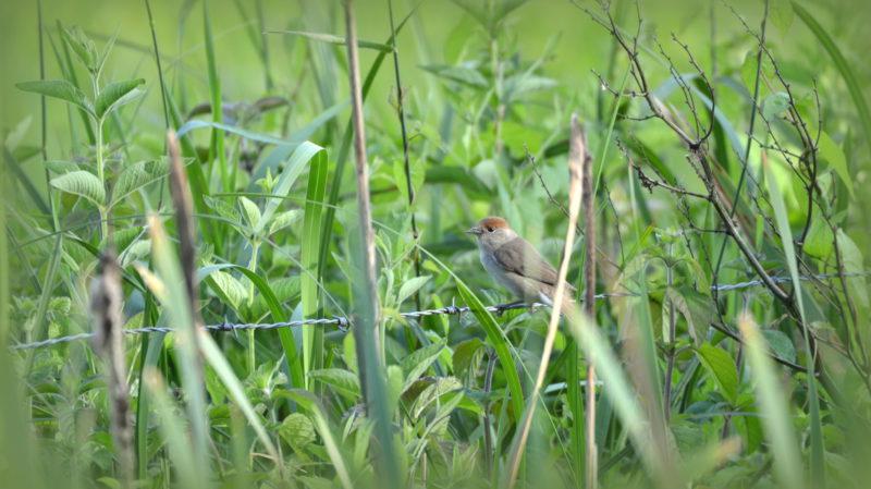 Little bird, Bourgoyen, Belgium -Virginie Suys Photo Canvas HD