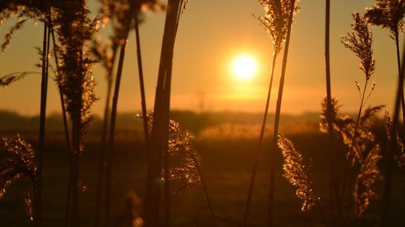 Sunset field 2, Damme, Belgium -Virginie Suys Photo Canvas HD