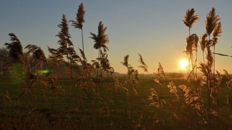 Sunset field, Damme, Belgium -Virginie Suys Photo Canvas HD