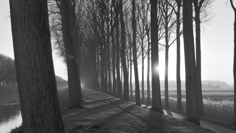 Tree lane by the river black & white, Damme, Belgium - Virginie Suys Photo Canvas HD