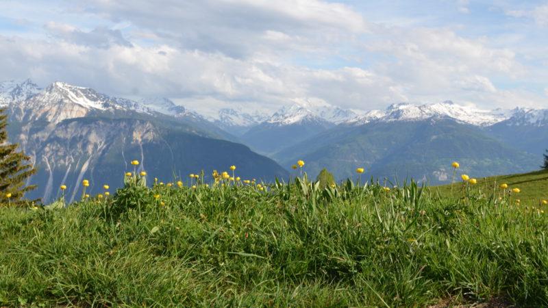 Flowers & mountains, Switzerland - Virginie Suys Photo Canvas HD