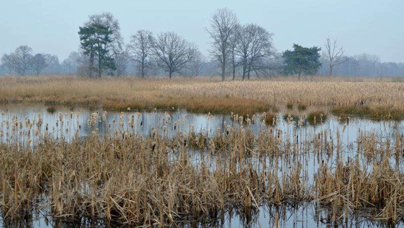 Swampy nature landscape, Belgium - Virginie Suys Photo Canvas HD