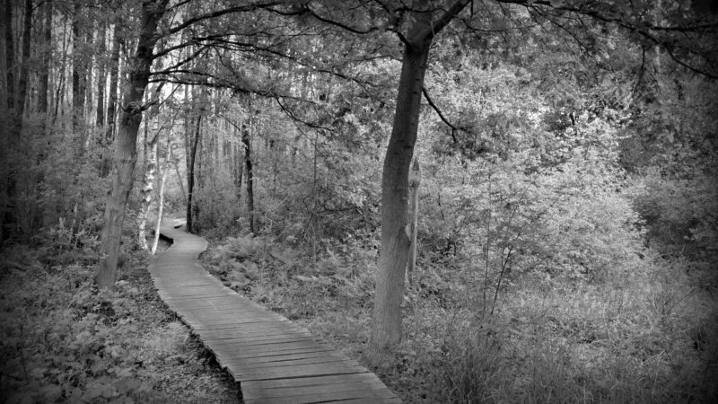 Into the woods black & white, Belgium - Virginie Suys Photo Canvas HD