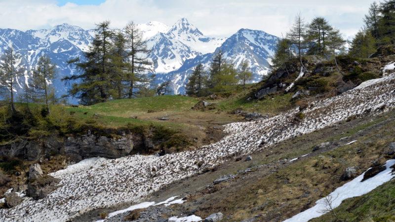 Mountains & trees 1 Switzerland, Virginie Suys Photo Canvas HD