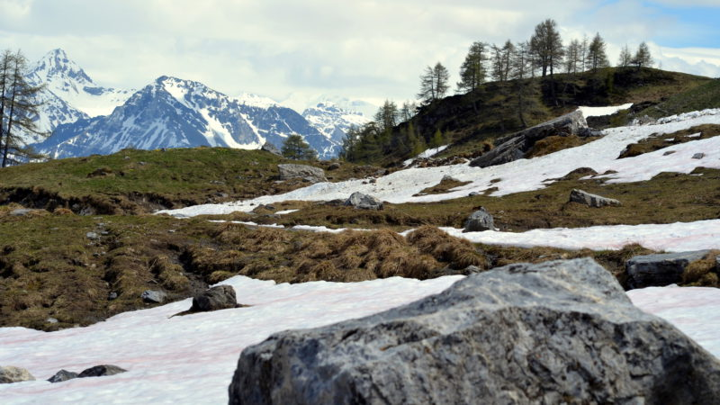 Mountains & trees 2 Switzerland, Virginie Suys Photo Canvas HD